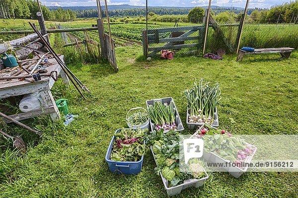 Landwirtschaft Pflanze Spezialität British Columbia Kanada
