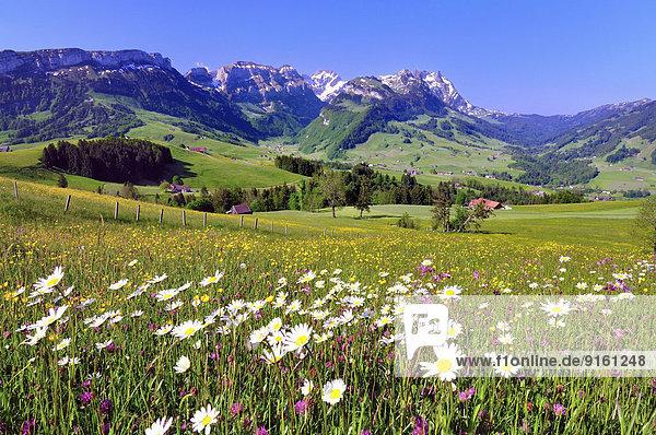 Blume Wiese Ansicht Geographie Bergmassiv Schweiz