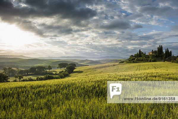 Baum Landschaft Hügel Bauernhof Hof Höfe Morgendämmerung UNESCO-Welterbe Toskana Morgenlicht Provinz Siena