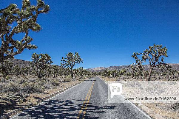 Straße durch Landschaft im Joshua-Tree-Nationalpark  Kalifornien  USA