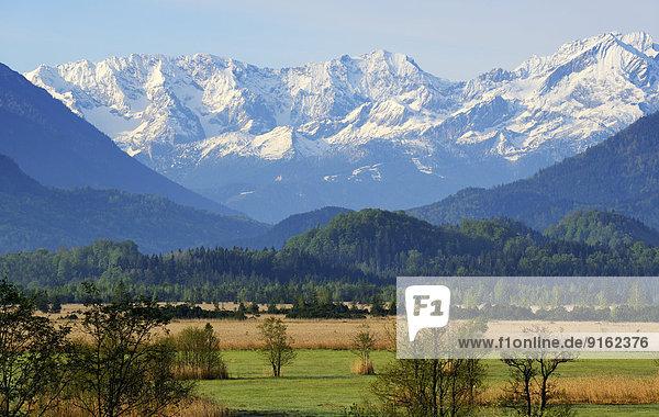 Murnauer Moos  Estergebirge  Murnau  Blaues Land  Oberbayern  Bayern  Deutschland