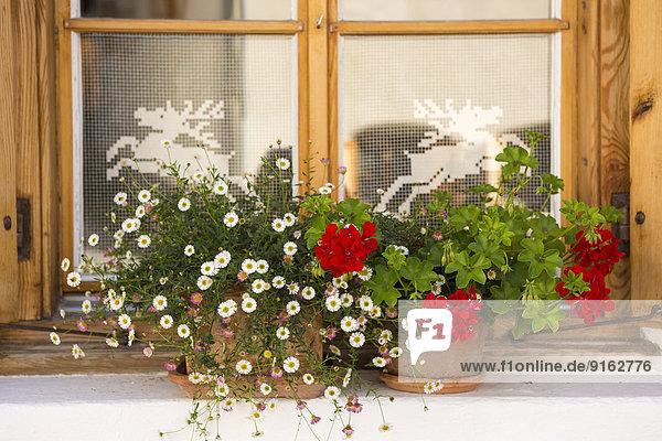 Fenster mit Blumen  S-charl  Graubünden  Schweiz Fenster mit Blumen, S-charl, Graubünden, Schweiz