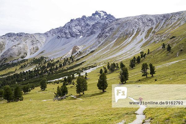 Wanderer im Val Mingèr  Schweizer Nationalpark  Graubünden  Schweiz Wanderer im Val Mingèr, Schweizer Nationalpark, Graubünden, Schweiz