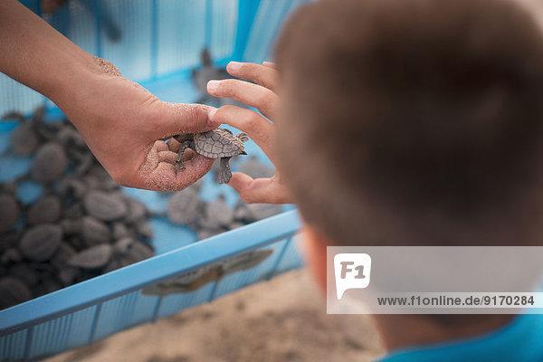 Mixed race boy examining small turtle Mixed race boy examining small turtle