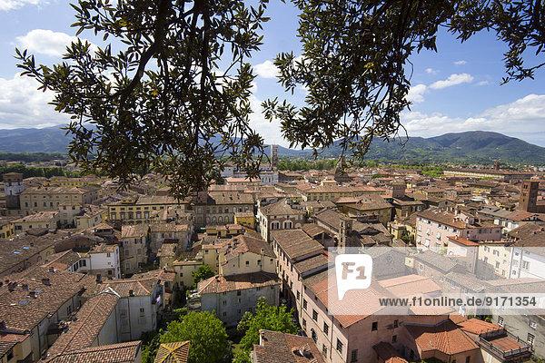 Italien  Toskana  Provinz Lucca  Lucca  Blick vom Torre Guinigi zur Kathedrale