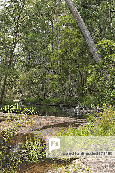 Australia  New South Wales  Mullumbimby  trees  shrub and rocks at a creek in the Nightcap National Park