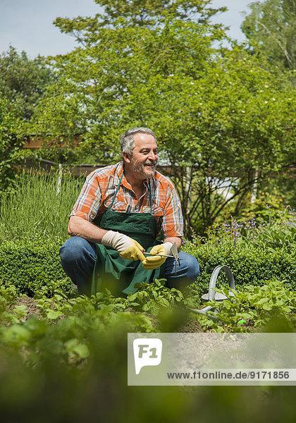 Germany  Hesse  Lampertheim  senior gardener at work