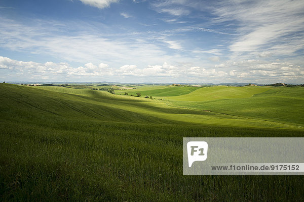 Italien  Toskana  Provinz Siena  Typische Landschaft bei Siena
