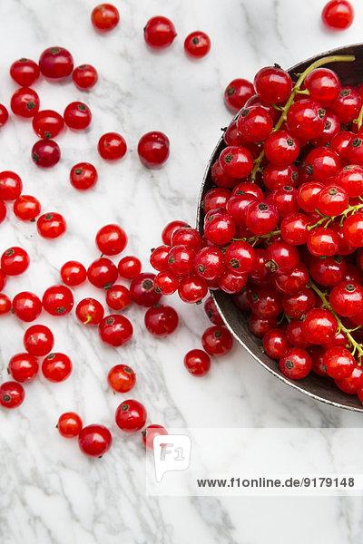 Metallschale mit roten Johannisbeeren  Ribes rubrum  auf weißem Marmor  Teilansicht
