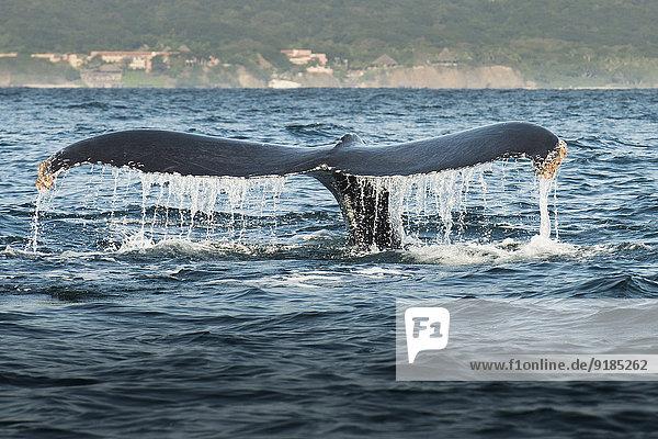 Wasser heben Wal
