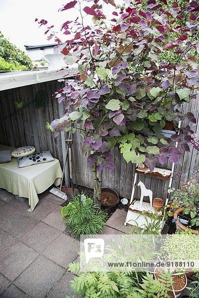 Pflanze Garten