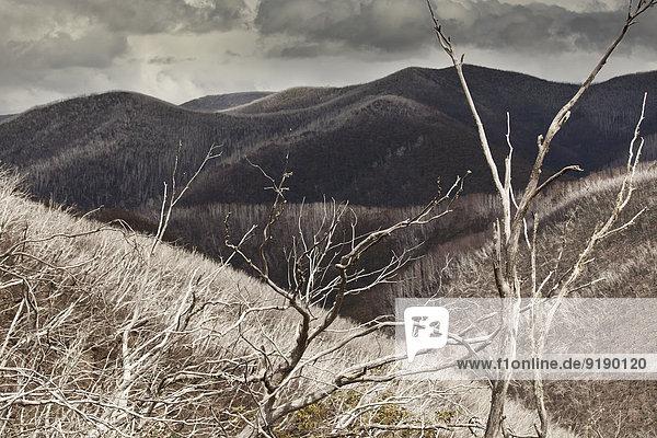 Blick auf kahle Bäume gegen Berge,  Mt Hotham,  Victoria,  Australien, Blick auf kahle Bäume gegen Berge,  Mt Hotham,  Victoria,  Australien