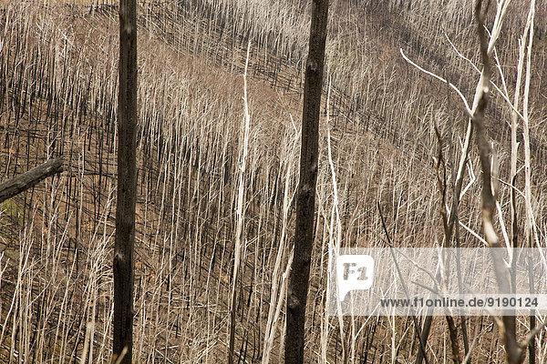 Blick auf trockene Bäume und Gräser