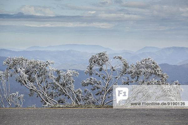Blick auf schneebedeckte Bäume  Berge im Hintergrund  Mt Hotham  Victoria  Australien