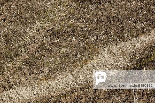 Blick auf trockenes Gras