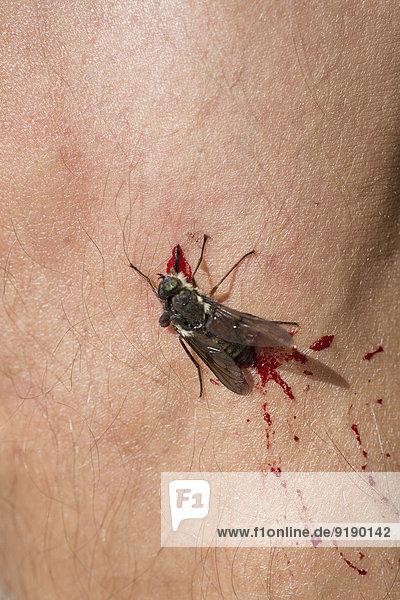 Nahaufnahme der toten Stubenfliege auf der Haut