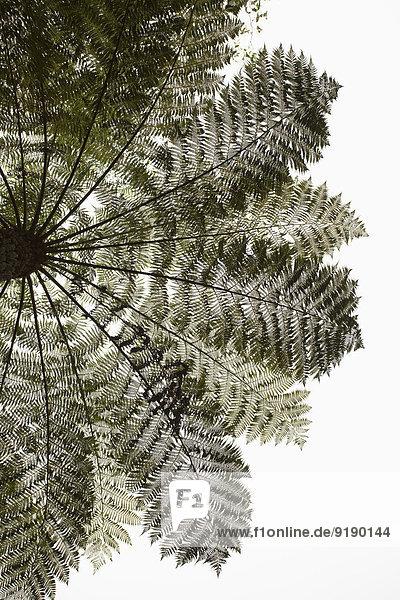 Tiefblick Palme gegen klaren Himmel