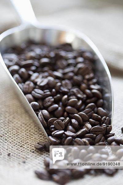 Scoop full of coffee beans
