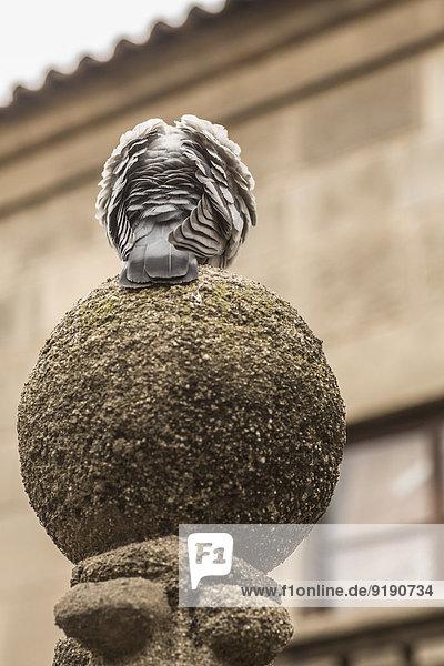 Vogel hockt auf Säule gegen Gebäude