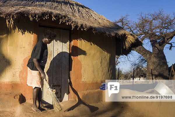 Woman sweeping in front of adobe house  right African Baobab Tree (Adansonia digitata)  Venda  Vhembe District  Limpopo Province  South Africa
