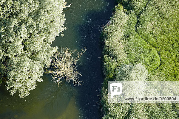 Mündung der Seefelder Aach in den Bodensee  Baden-Württemberg  Deutschland Mündung der Seefelder Aach in den Bodensee, Baden-Württemberg, Deutschland