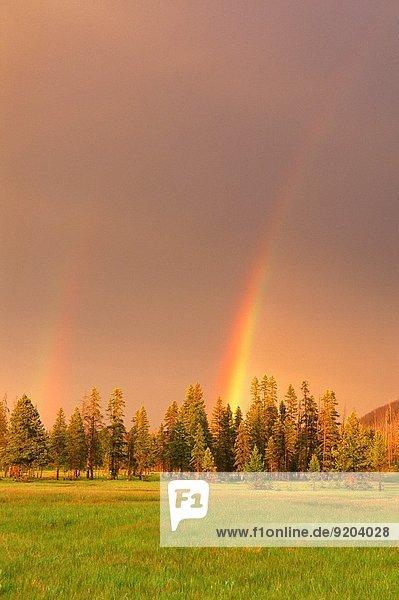 Vereinigte Staaten von Amerika USA über Wiese Nadelbaum Yellowstone Nationalpark Regenbogen Wyoming