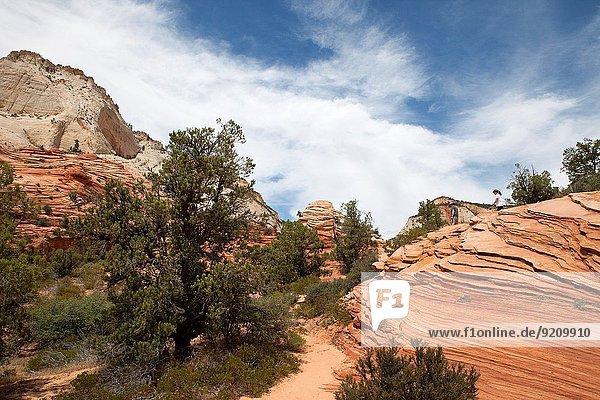 Vereinigte Staaten von Amerika USA Nationalpark Sommer Utah