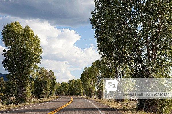 Vereinigte Staaten von Amerika USA Nationalpark Tag Sommer Baum fahren Straße Ehrfurcht Sonnenlicht vorwärts Menschenreihe Wyoming