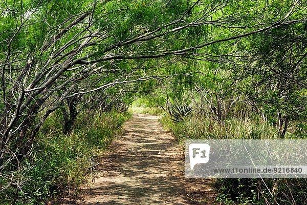 Trail at Camp Lula Sams - Brownsville; Texas USA.