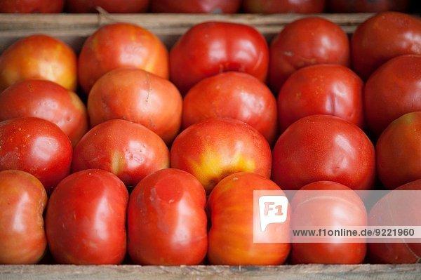 Produktion Tomate Mittelpunkt Chile Markt Großhandel