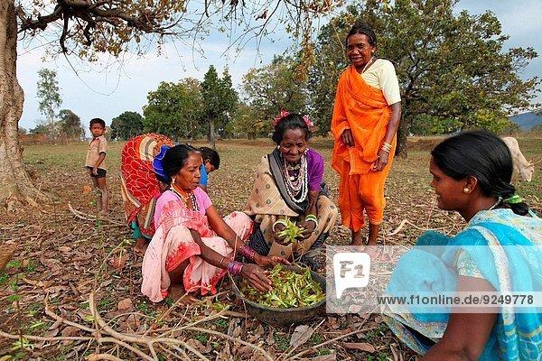 Frau Wald Volksstamm Stamm Indien