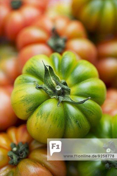 Grüne Fleischtomate auf verschiedenen Tomaten