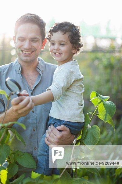 Mittlerer erwachsener Mann und Sohn beim Betrachten von Pflanzen auf dem Schrebergarten