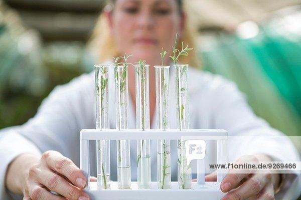 Wissenschaftlerin hält Pflanzenproben in Reagenzgläsern hoch