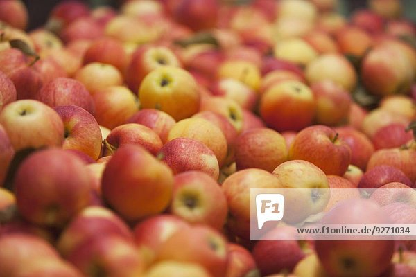 Frische Apfel