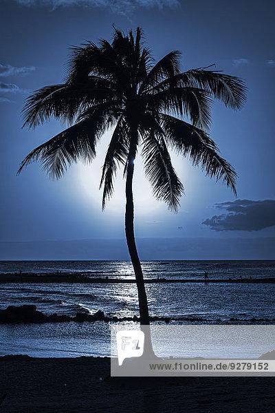 Palme  Abendstimmung  Kauai  Hawaii  USA