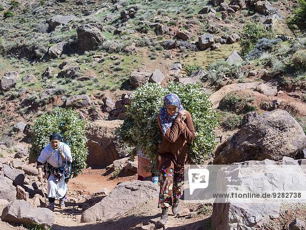 Mehrere Frauen mit schwerer Last auf einem Bergpfad im Atlas-Gebirge,  Lehmdorf Anammer,  Ourika-Tal,  Marrakech-Tensift-Al Haouz,  Marokko