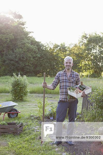 Volle Länge des reifen Mannes mit einer Kiste frisch geernteten Gemüses im Garten.