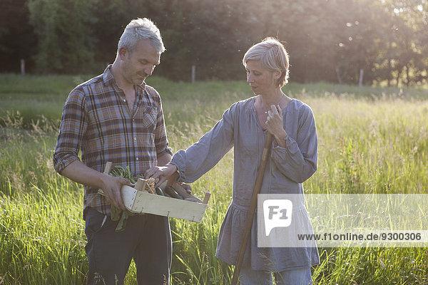 Reife Paare untersuchen geerntetes Gemüse in Kiste im Gemeinschaftsgarten