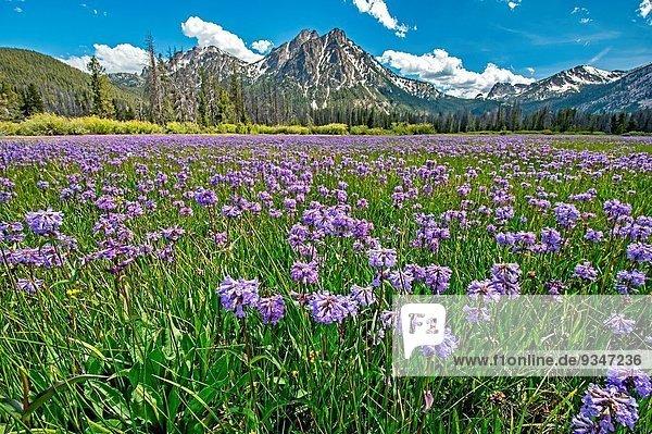 nahe Berg See Wildblume Wiese Mittelpunkt unterhalb Idaho