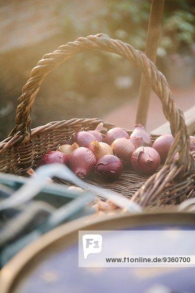 Korb mit Pflanzenzwiebeln im Gewächshaus