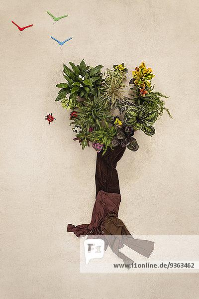 Baum aus Pflanzen und Hosen