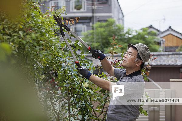 Mann arbeiten Garten