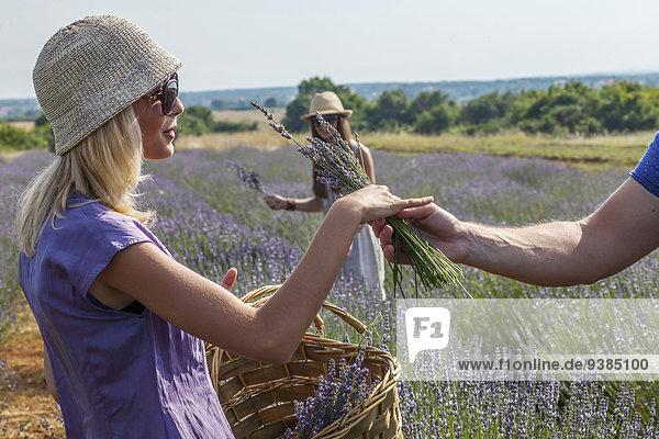 Mensch Menschen Feld Lavendel