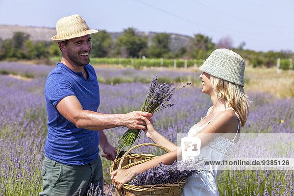 Feld jung Lavendel