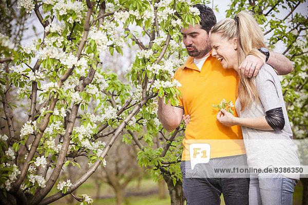 Fröhlichkeit Kirsche blühen aufheben