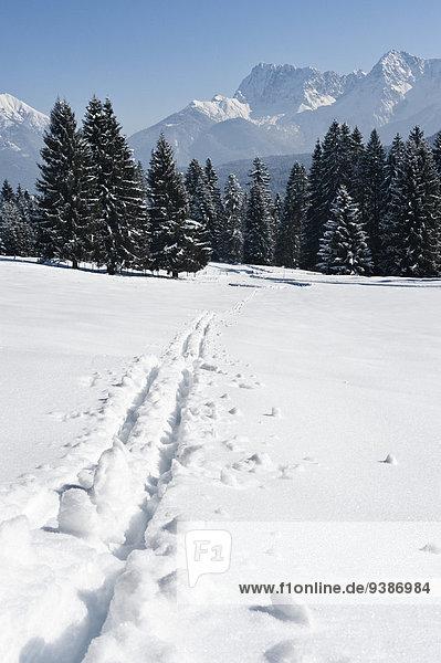Old ski tracks in winter landscape  Garmisch  Bavaria  Germany