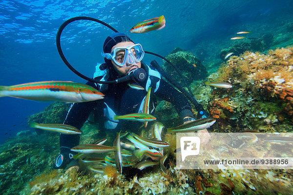 Fischschwarm Adriatisches Meer Adria