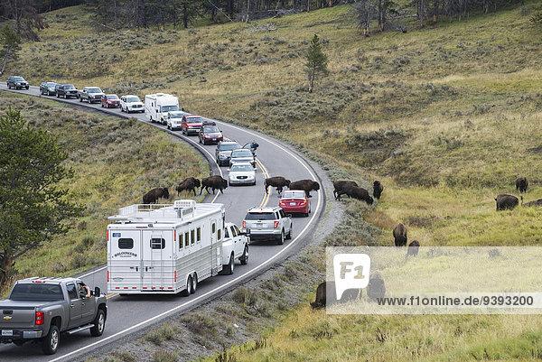 Vereinigte Staaten von Amerika USA Nationalpark Amerika Auto Tier Fernverkehrsstraße Yellowstone Nationalpark Bison Tourismus Wyoming