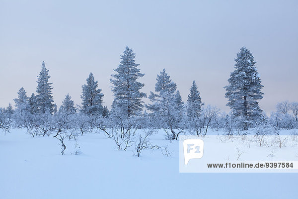 Trees  Europe  Finland  Kiilopää  scenery  landscape  Lapland  light mood  snow  Urho Kekkonen  national park  winter